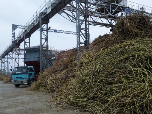 収穫されたサトウキビの山とトラック